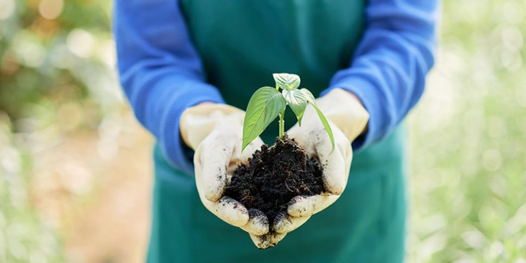 seedling in hands image